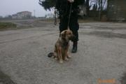 Strážníci odchytávali psa